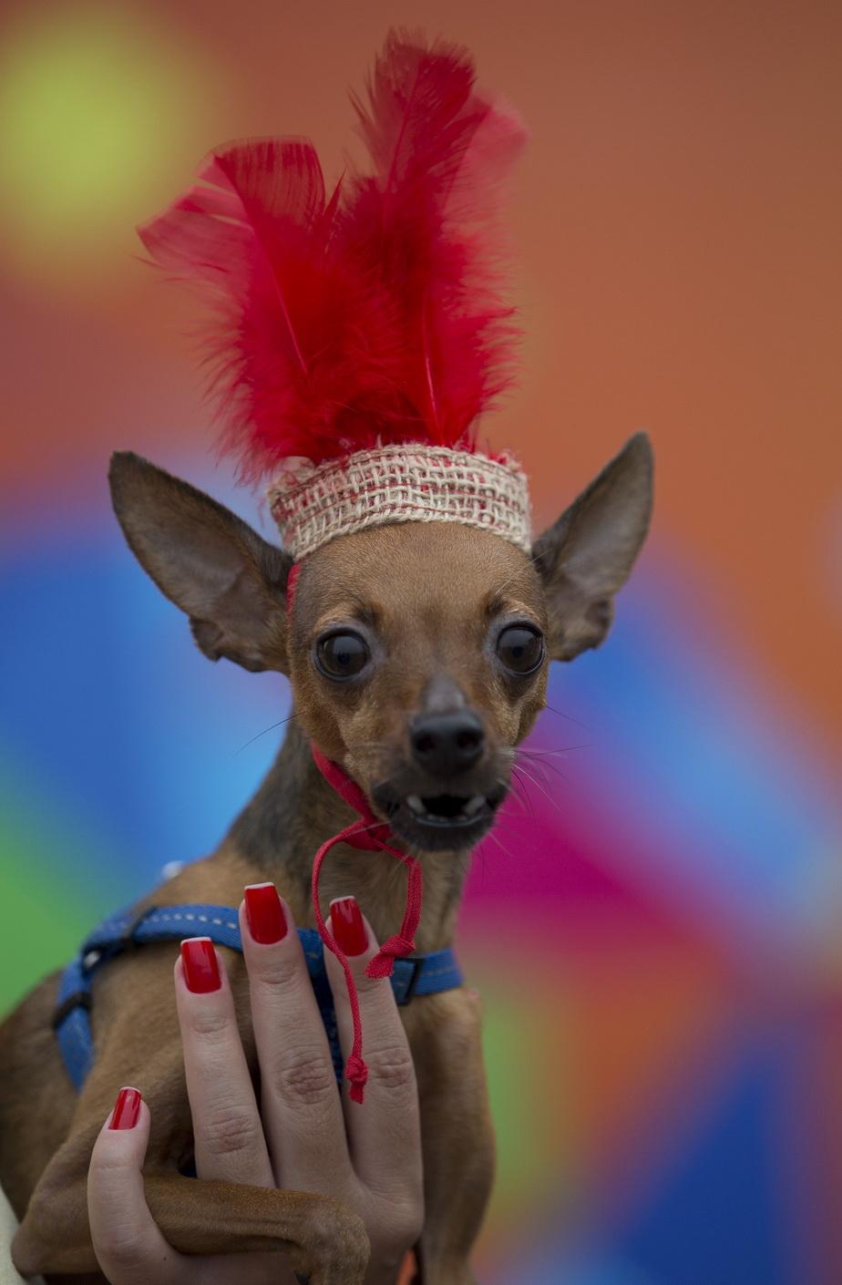 Carnavalul căţeilor, la Rio de Janeiro