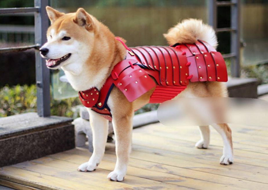 GALERIE FOTO Costumele de samurai pentru... câini și pisici, ultima modă în Japonia