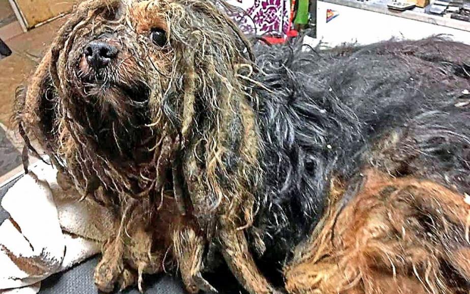 Acest câine a fost găsit după cinci ani petrecuți într-o pivniță. Este incredibil cum arată!