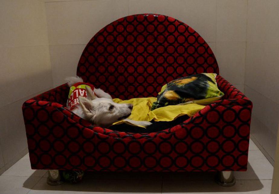 FOTO S-a deschis primul hotel de lux pentru câini. E incredibil ce oferă!