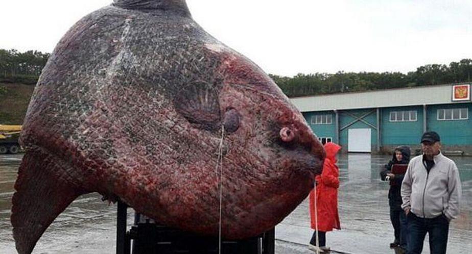 Acesta este cel mai mare pește pe care l-ai văzut vreodată. E ca un monstru!
