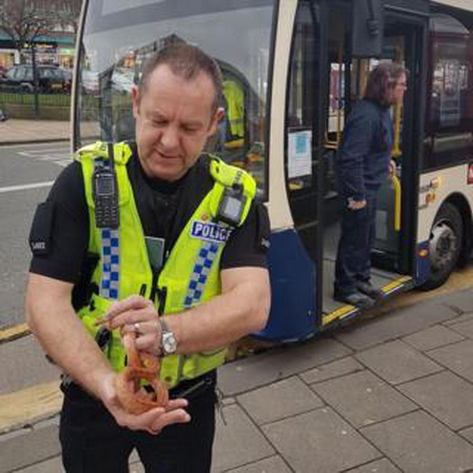 Alertă într-un autobuz din Marea Britanie. E îngrozitor ce au văzut călătorii!