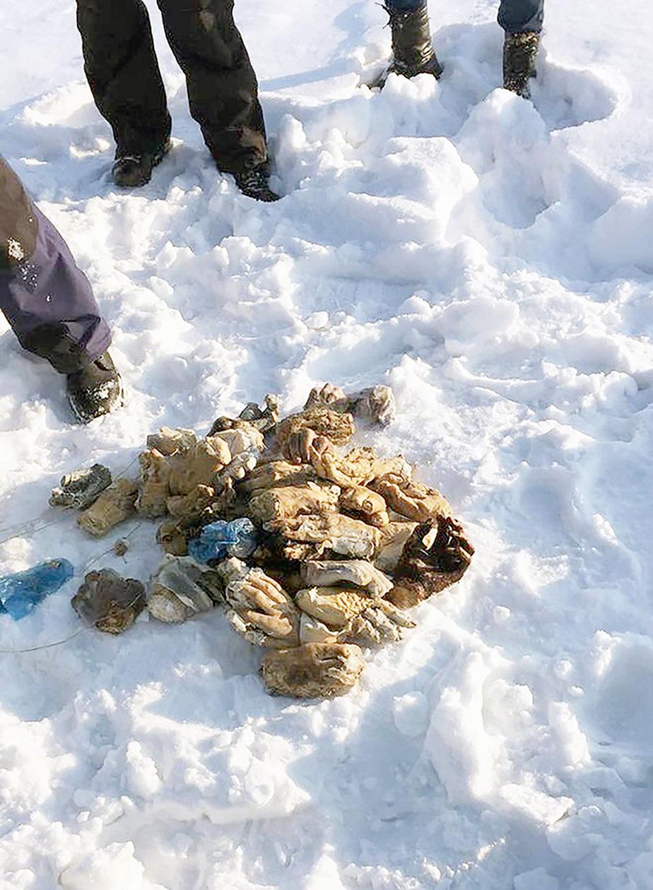 Șocant! 27 de perechi de mâini de om, descoperite într-o geantă