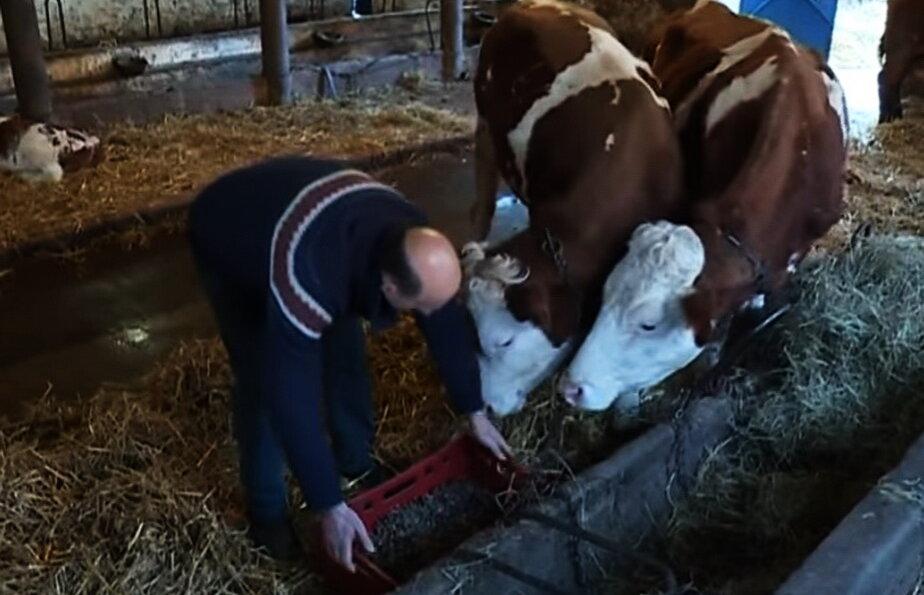 Cu ce se hraneste vaca