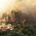 Tot în această vară, incendii de vegetație au avut loc și în Portugalia Foto: Guliver/GettyImages
