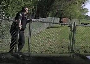VIDEO Vei râde cu lacrimi! Un polițist fuge de rupe pământul de frica unei vaci