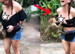 VIDEO O maimuță obraznică i-a tras bluza de pe sâni unei turiste. Acum imaginile sunt virale