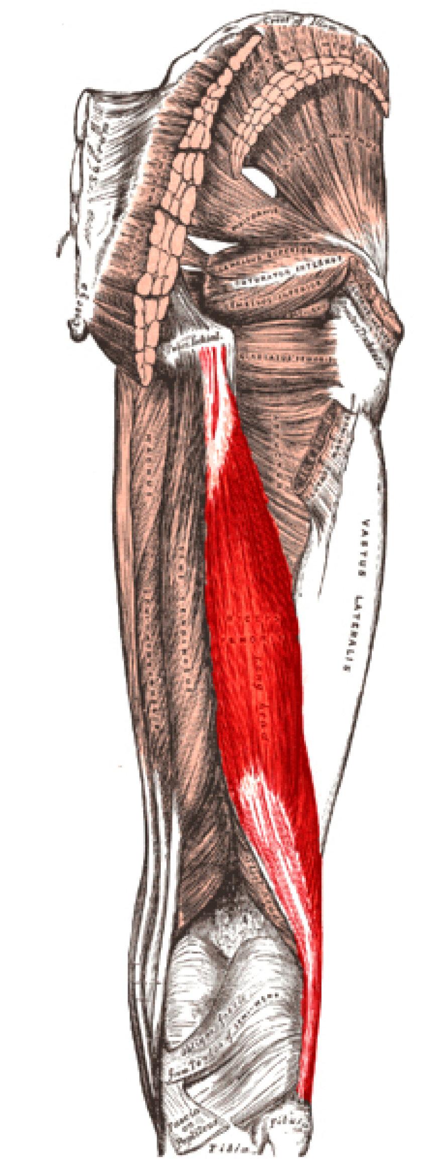 Aşa arată muşchiul care le dă atîtea bătăi de cap celor de la Barcelona