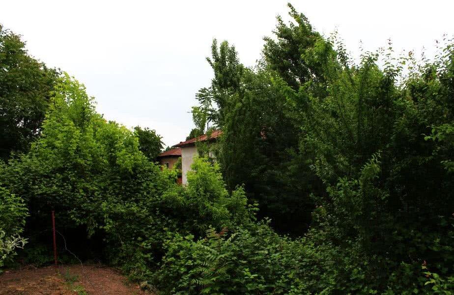 Baza de la Ploiești a fost deja cucerită de jungla urbană: colțurile sălii abia se mai zăresc printre plante